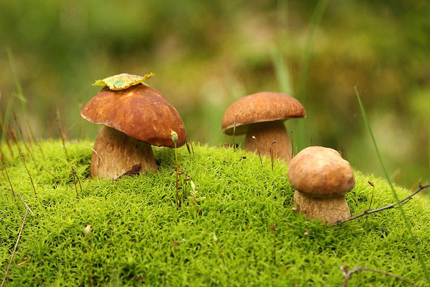 """Результат пошуку зображень за запитом """"гриби"""""""